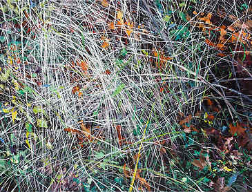 "Grass Tangle, 2016, 30"" x 40"", acrylic on canvas"